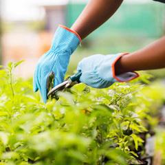 Giardiniere specializzato nella manutenzione e for Giardiniere milano